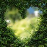 Piękny ,a także zadbany ogród to zasługa wielu godzin spędzonych  w jego zaciszu w trakcie jego pielegnacji.